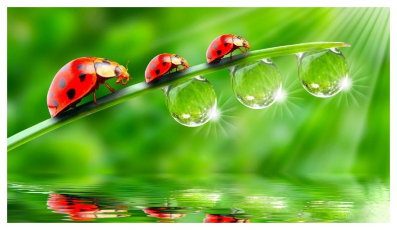 Wallpaper Leaves, Grass, Dew, Drops Free Photos Download