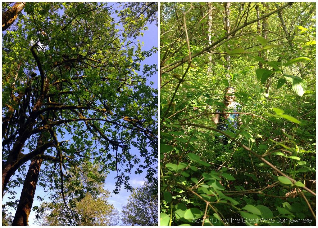 Beautiful Foliage on the Puget Loop Birding Trail at John MacDonald Memorial Campground