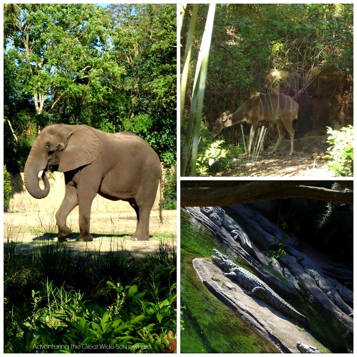 Animal Sightings on Kilimanjaro Safaris at Disney's Animal Kingdom