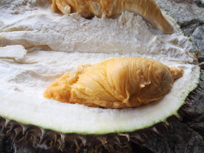 durian festival red prawn