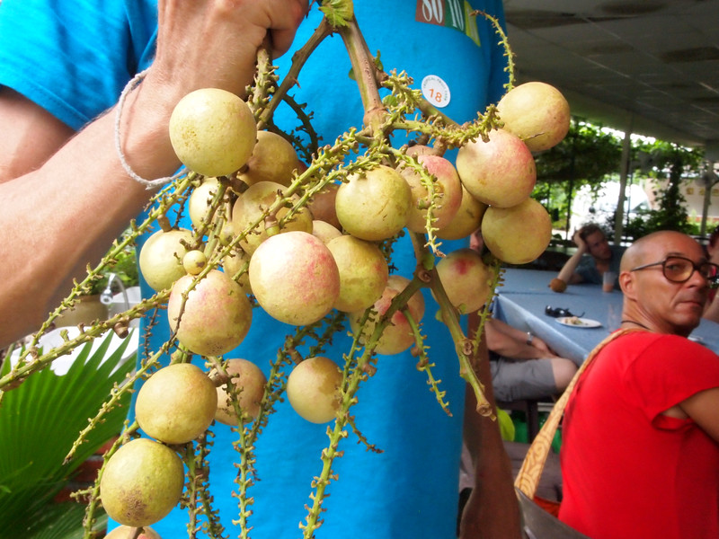fijian longans