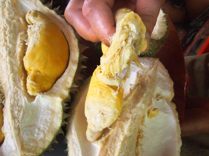 durian farm