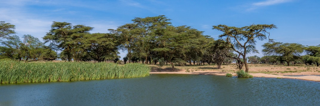 The lake near Maji Moto, Kenya.