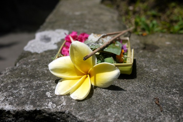 balinese offerings of flowers that are left around the island