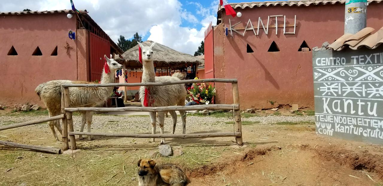 10 Incredible Reasons You Need to Visit Peru - RoarLoud