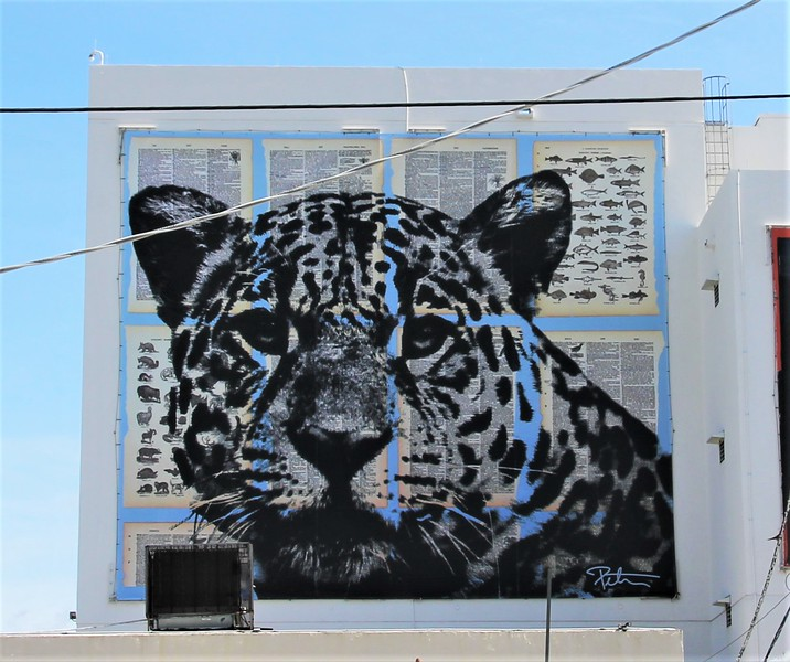 leopard cat street art