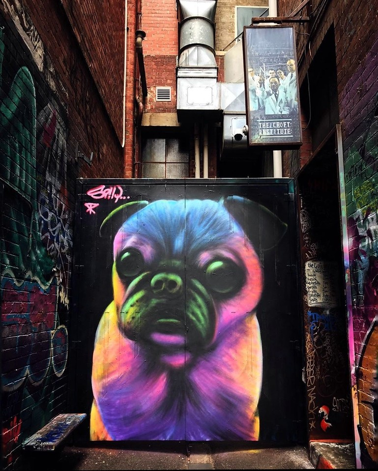 Cute Pug - Interview with Silly Sully - StreetArtChat.com