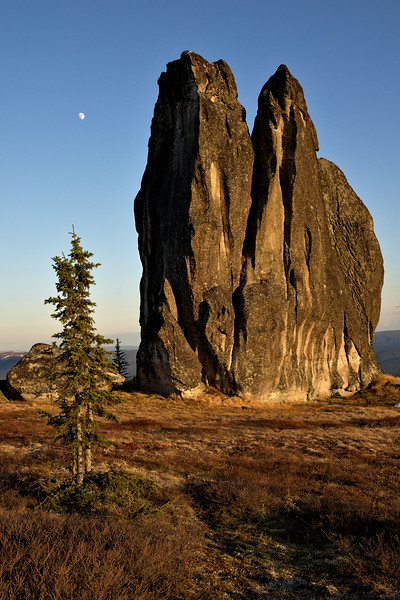 The Asgard Tor, a granite tower with the moon over it and a spruce tree