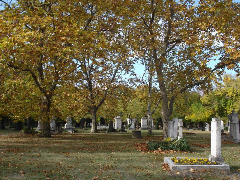 Kerepesi Cemetery trees