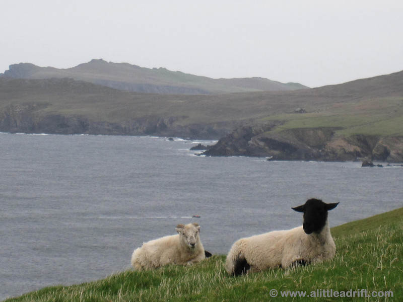 Views of the ocean and sheep along Slea Head Drive.