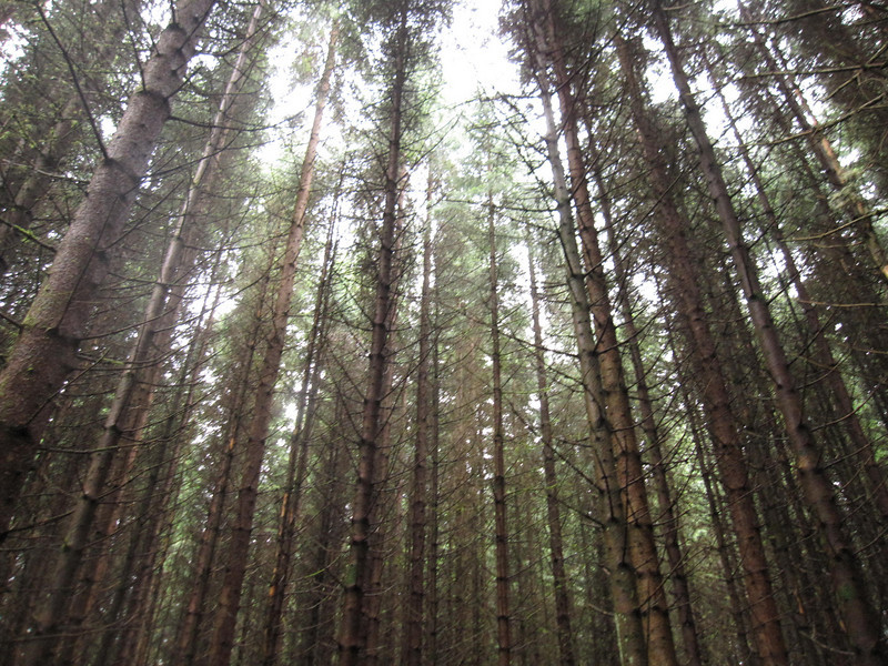 Forest walk from Fort Augustus