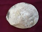 #2421 Mammites nodosoides Ammonite (cuted and polished) (14,0 cm)