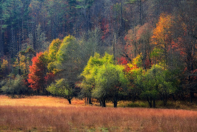 autumn field