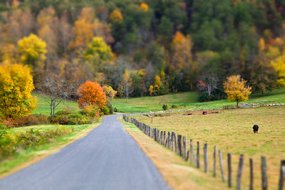 Road Beside Cow Pasture