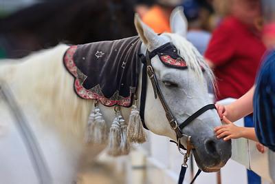 Pretty White Horse