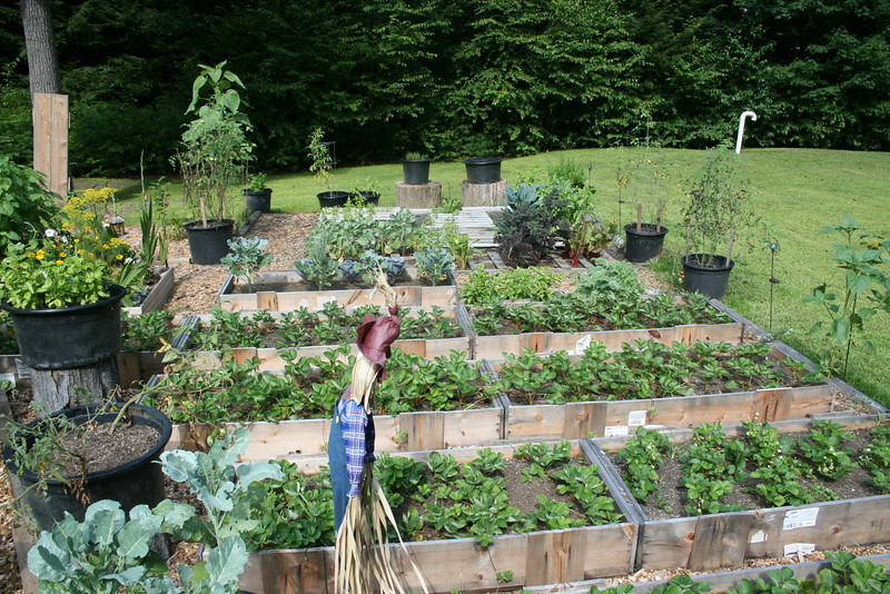 Creative Gardening: How to Make a Vertical Pallet Garden - Tamara ...
