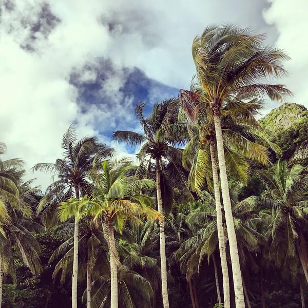 palm trees on Seven Commandos Beach