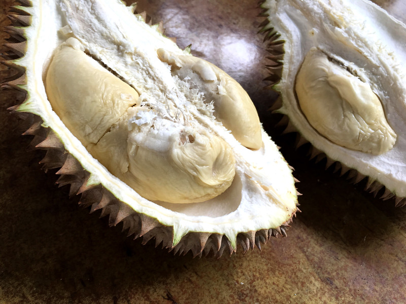 durian homestay