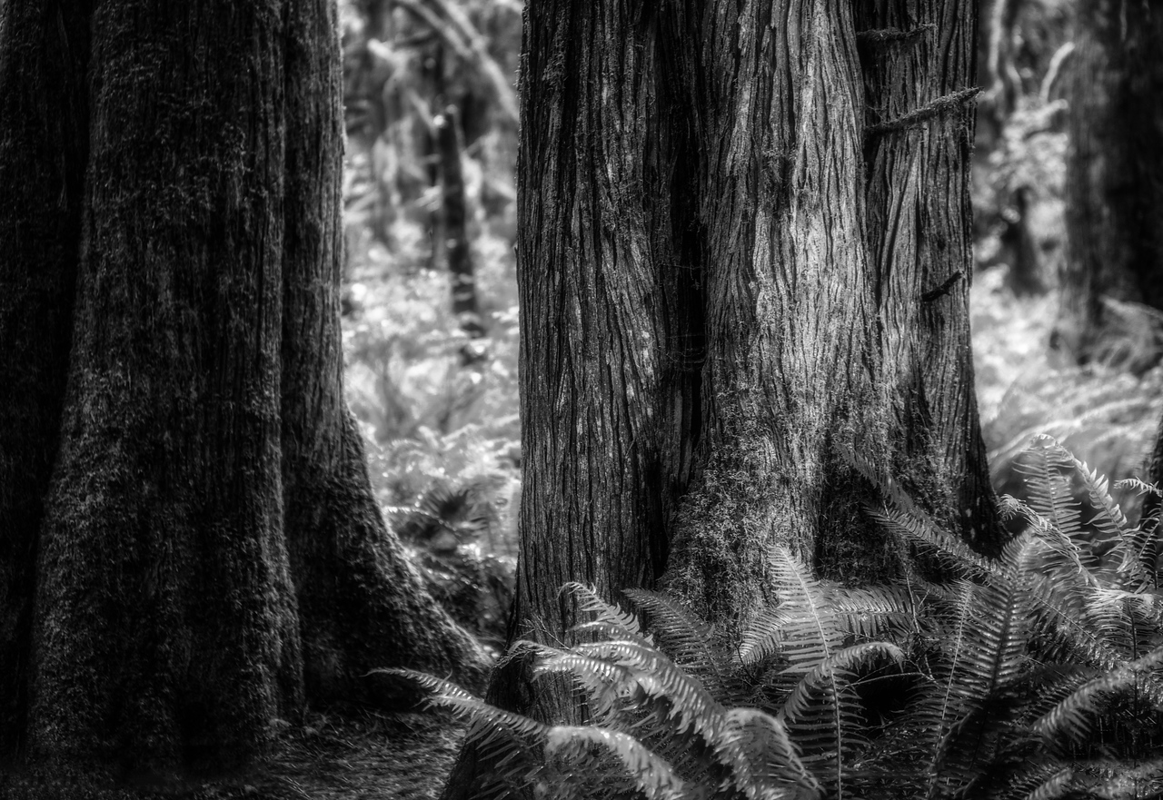 Into the Forest B/W