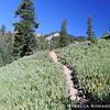Mill Creek Falls trail