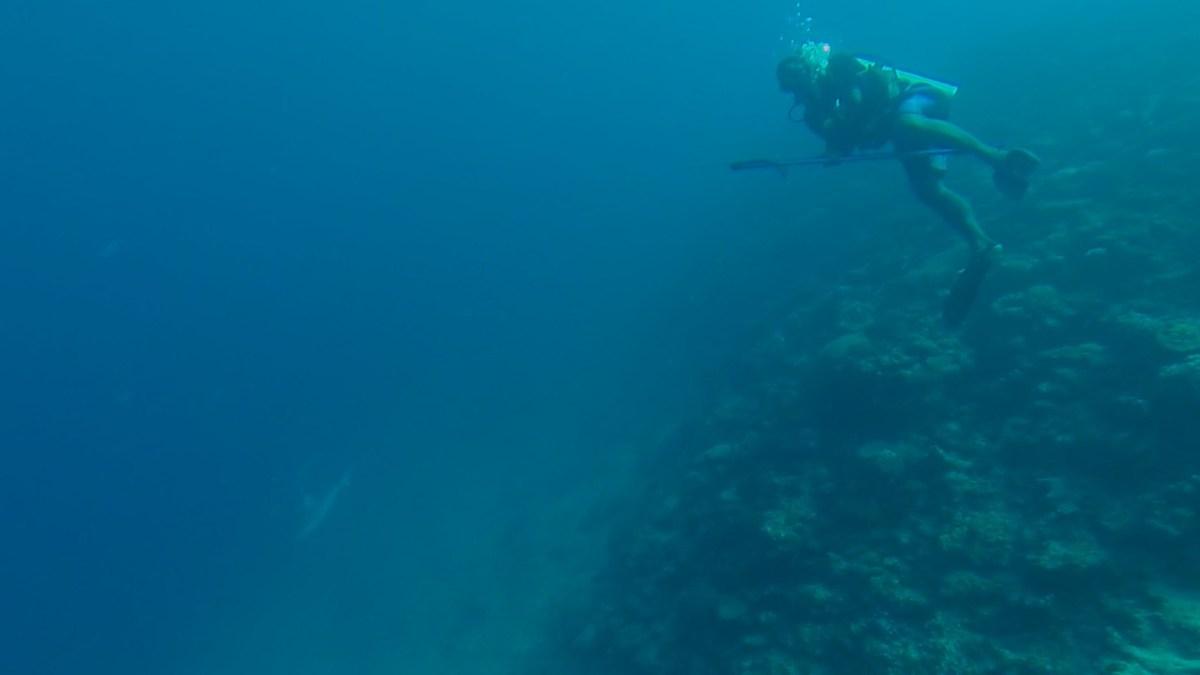 Mana Island Fiji Backpackerne