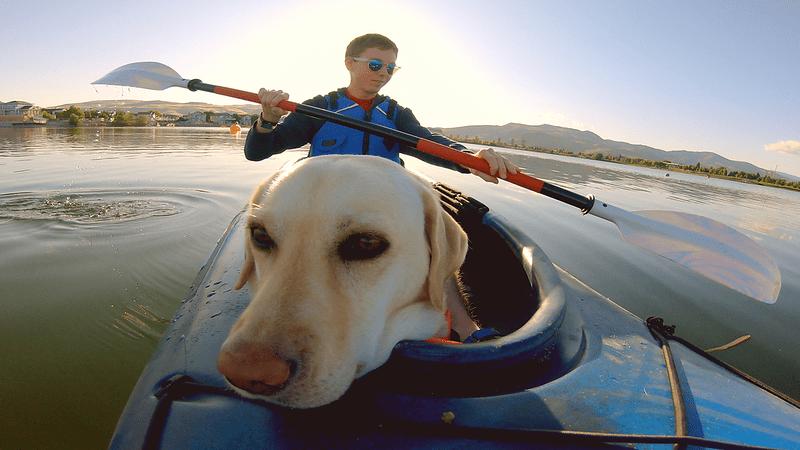 it's a dog's life with bill farmer disney plus (3)