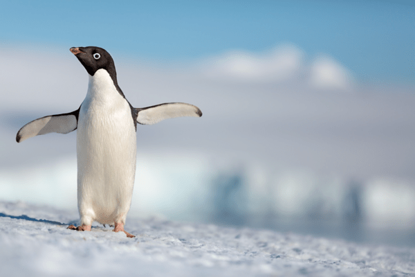 Steve is already melting our hearts in the new trailer for Disneynature PENGUINS