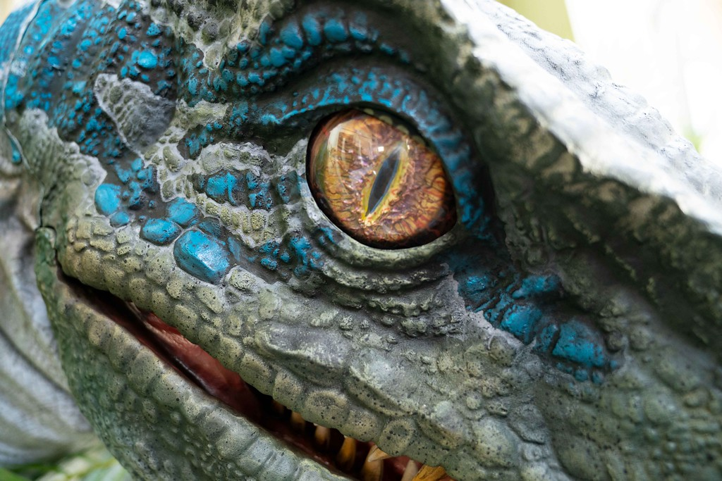 "Blue, the Velociraptor from Universal Pictures and Amblin Entertainment's Jurassic World Franchise,<br /> debuts at Universal Studios Hollywood and Universal Orlando Resort as part of the ""Raptor Encounter"" experience."