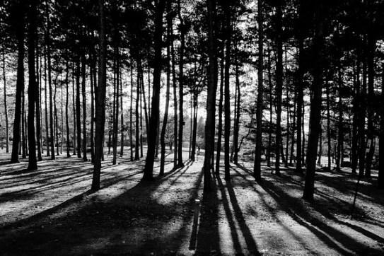 """Résultat de recherche d'images pour """"photo d'ombre et de lumière"""""""