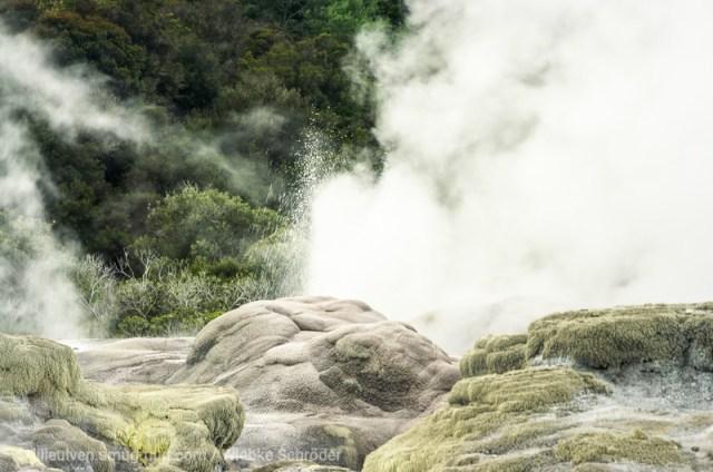 Pohutu Geyser in Te Puia