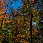 In Search of Autumn – Cedars of Lebanon State Park