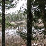 Phyllis Massey Stafford Conservation Area 24