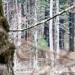 Phyllis Massey Stafford Conservation Area 29