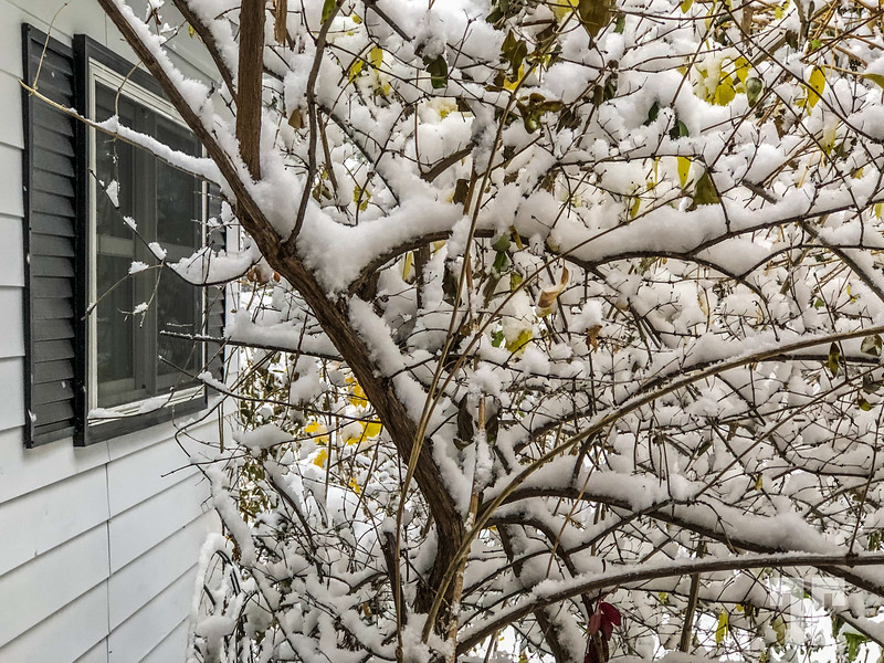 Snow covered tree and bird feeder at Bigfork, Montana in the month of October