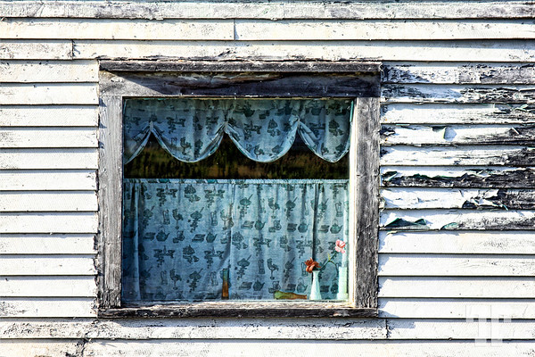 Window with flowers in an old weathered house in Avalon Peninsula, Newfoundland