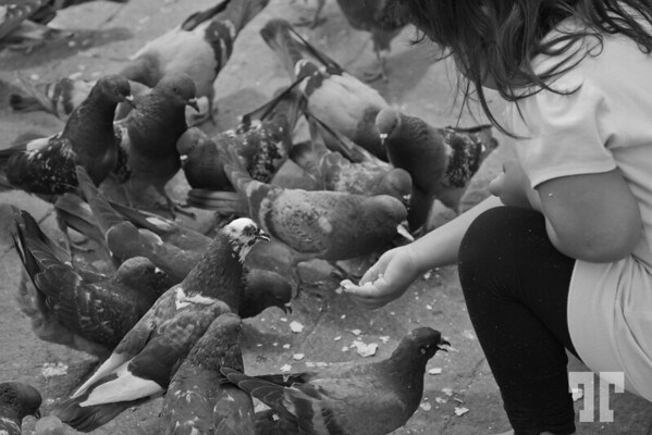 Girl feeding Pigeons in Campeche Plaza black and white photography