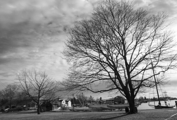 A tree in winter on the Mystic Seaport common.