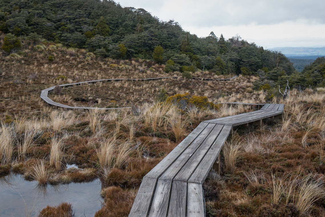 Boardwalk trail heads down into the forest toward Waitonga Falls