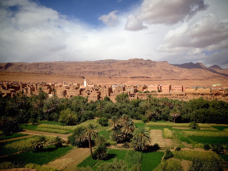 palm grove in Morocco