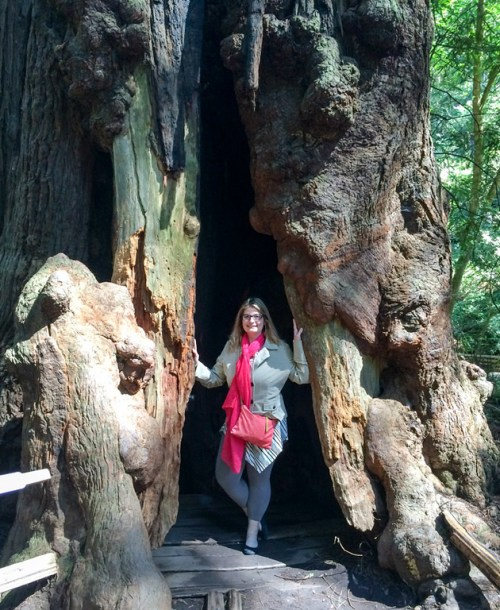 Muir Woods is a wonderful day trip to take from San Francisco