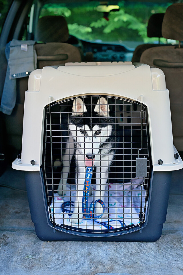#sponsored Welcome home, Lucy! Here's why we choose plastic kennels for home and travel. #PetMate #WelcomeHome @PetmateProducts