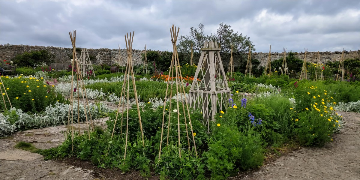 Holy Island (Lindisfarne) - Gertrude Jekyll's Garden