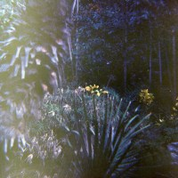 120 Garden of the Groves, Freeport, Bahamas via a Diana Camera