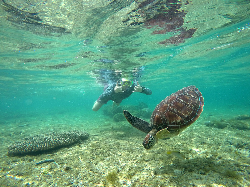 swimming with turtles off Apo Island in the Philippines