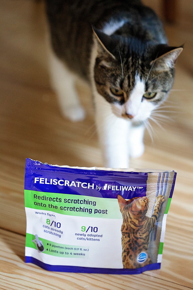 Have a scratching cat? Have no fear! There are wonderful alternatives to de-clawing and they really work! I personally have one tip that will help save your furniture! #ad #feliway #feliwaycat Check it out!