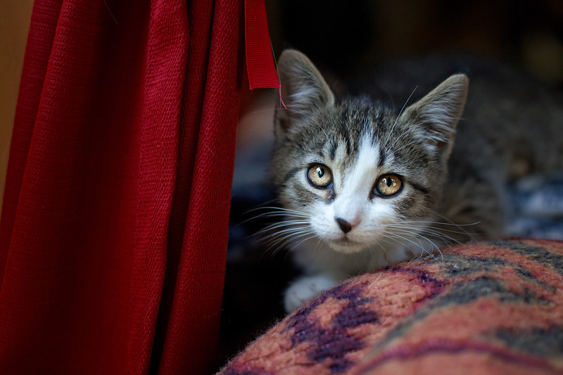 Essentials for Your Kitten: Becoming a cat owner is an exciting step in anyone's life! Cats are great pets and will provide entertainment.