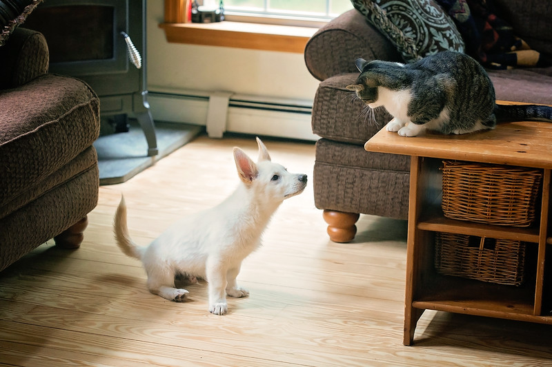 How To Decide Whether To Get A Cat Or Dog