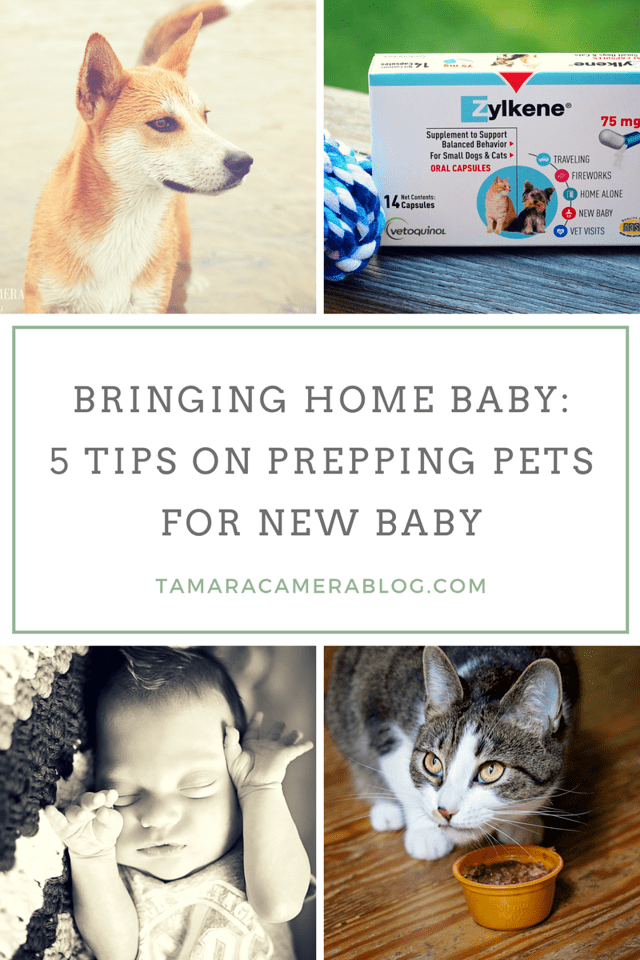 Bringing home baby? Read 5 tips for introducing pets to babies! These tricks will help prep your dog and/or cat for baby #ad #ZylkeneDifference #MyHappyPets