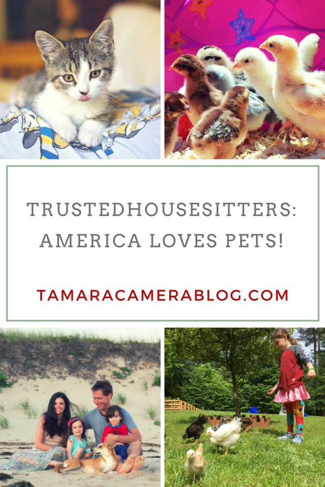 Take a trip across the country and discover how much America Loves Pets from state 2 state! Join the #AmericaLovesPets conversation - share pet pictures #ad
