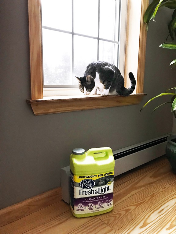 Find out how I'm helping millions of cats, simply by buying Cat's Pride litter for Juniper. If you're a cat lover like me, Litter For Good is an amazing program. #ad #LitterForGood #CatsPride